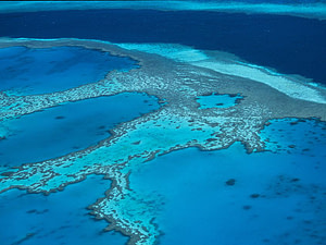 Reef's massive size may be an asset in helping it withstand climate change