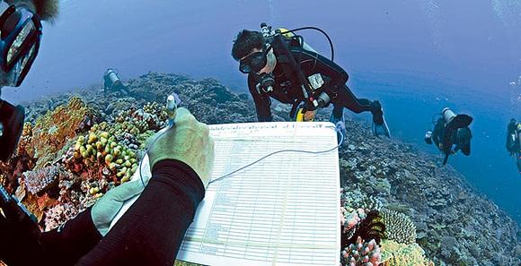 Photo of scuba divers