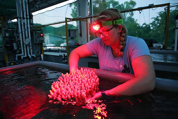 Dr Carly Randall conducting spawning research in the National Sea Simulator, AIMS, during coral spawning
