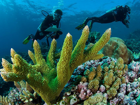 Monitoring reef condition