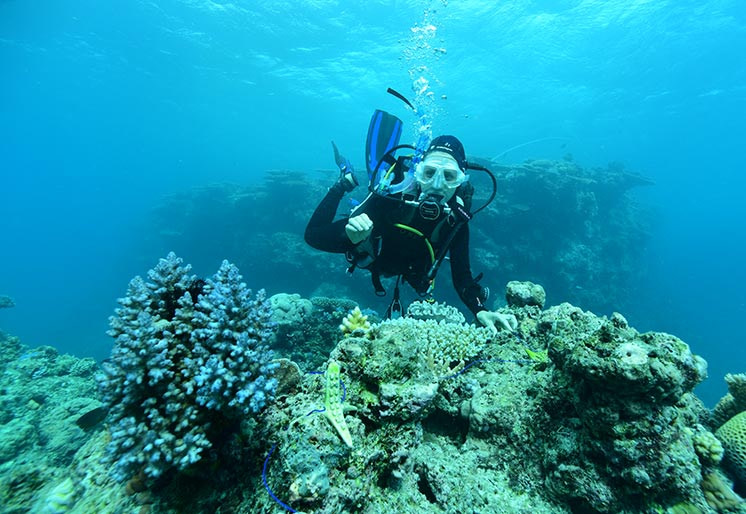 Photo of a snorkeler