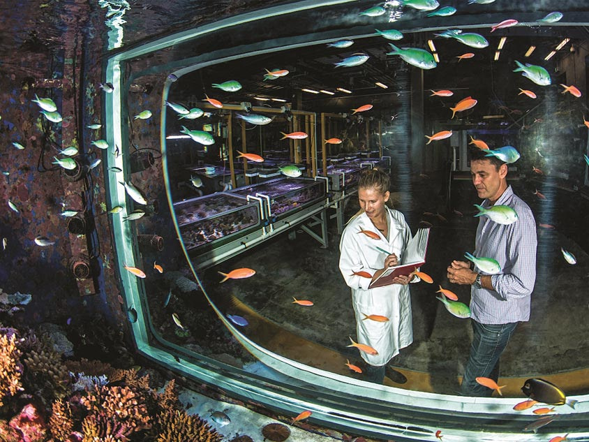 Innovative ways to help the Great Barrier Reef are being explored in the National Sea Simulator, AIMS
