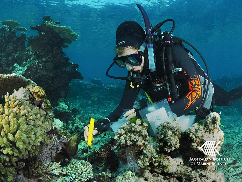 Application of field treatments to enhance coral survival