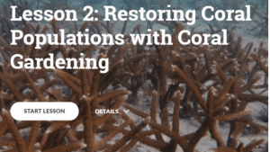 Coral restoration Training Course
